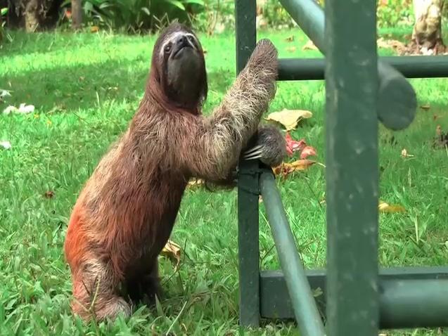 How To Potty Train a Sloth