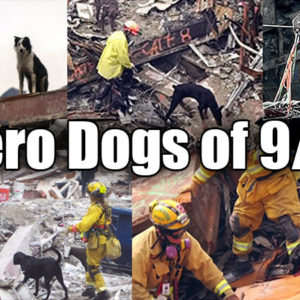 Remembering The Hero Dogs Of 911 And Their Ultimate Sacrifice
