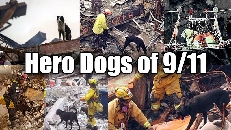 The Hero Search Dogs of 911