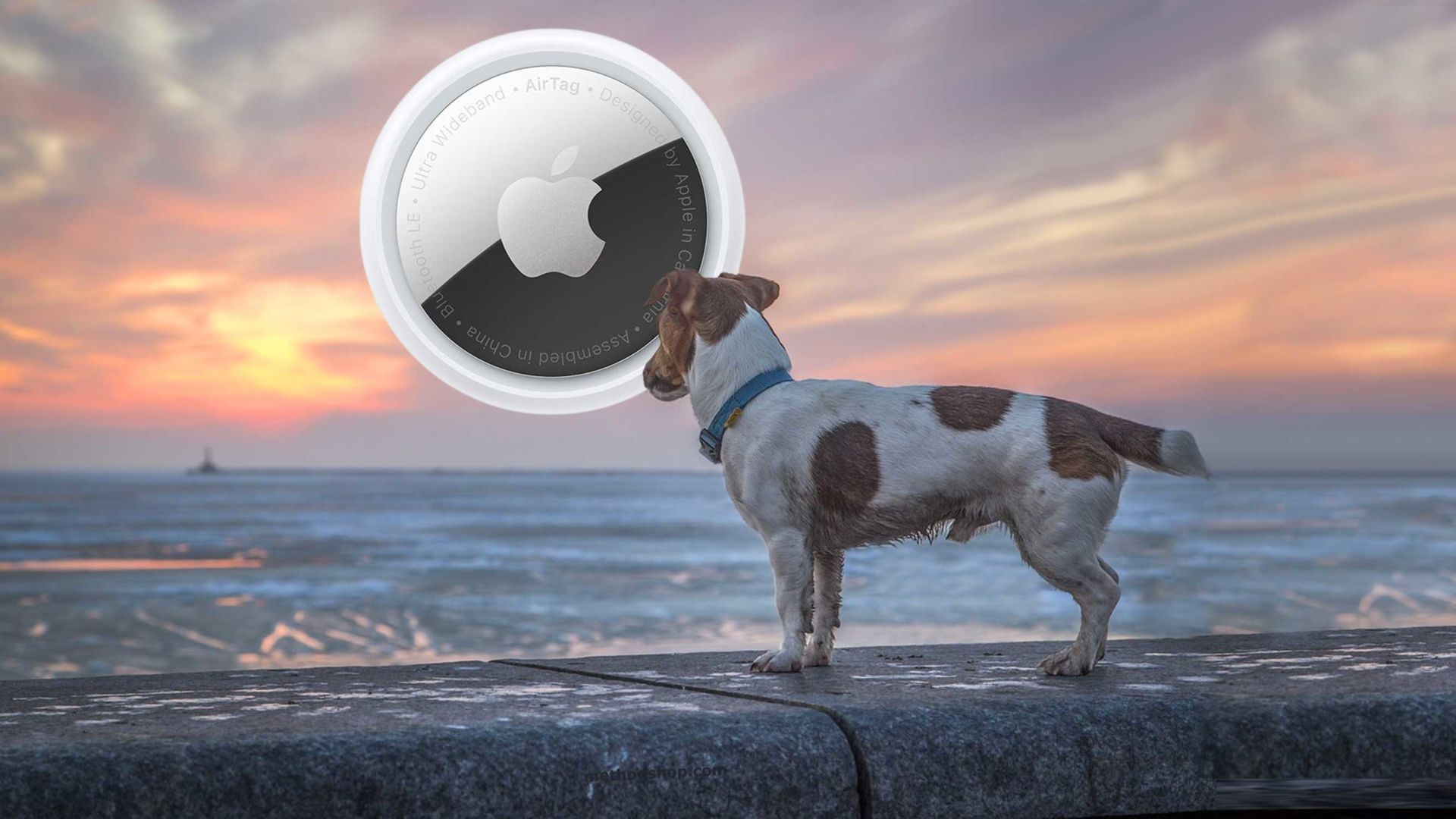 Pet Tracker: Make Recovering Lost Pets Easier With An Airtag