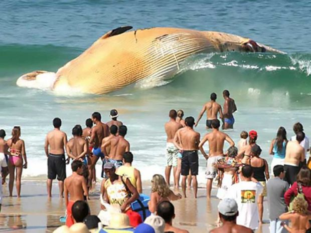 Dead Whale Washes Up On To Beach - People Having A Worse Day Than You