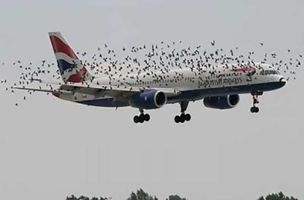 British Airways Plane Surrounded By Birds