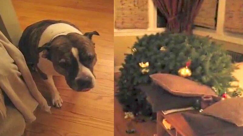 Bad Dog vs Christmas Tree