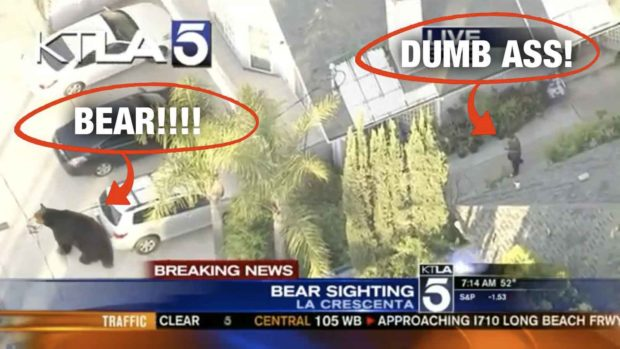 Ultimate Texting And Walking Fails: Guy Texting And Walking Almost Walks Into a Bear
