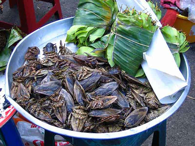Bowl Of Giant Water Bugs