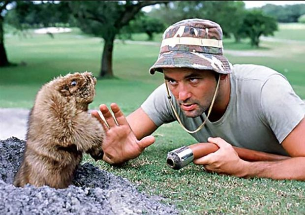 Freeze Gopher: Caddyshack Quotes Bill Murray