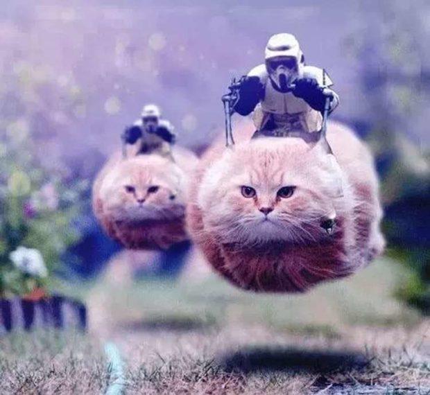 Cat Speeder Bikes