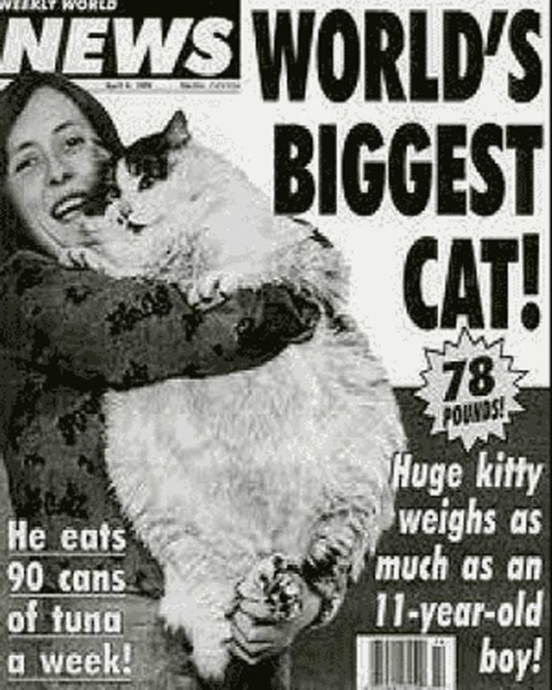 World's Biggest Cat: 78 Pounds!