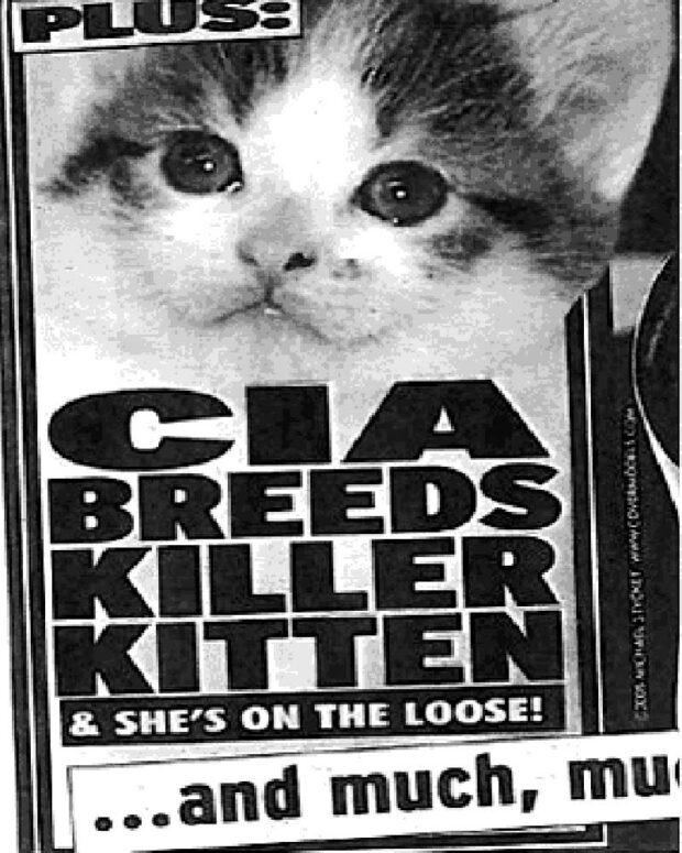 CIA Breeds Killer Kitten & She's on the Loose