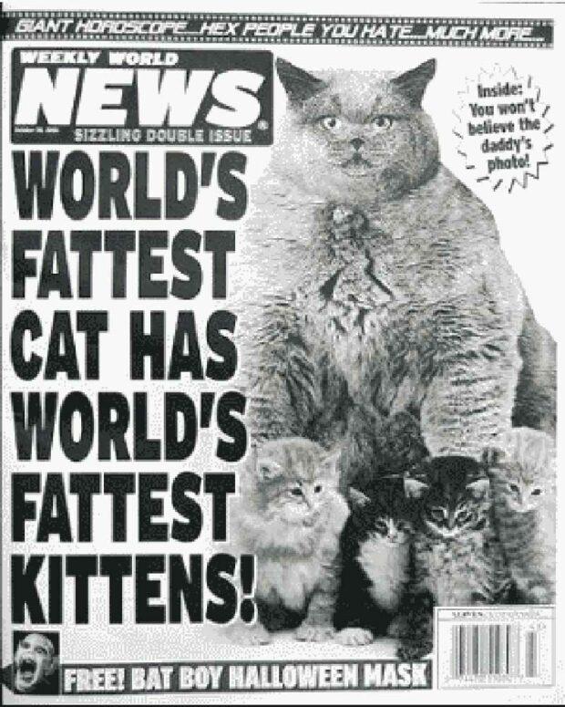 World's Fattest Cat Has World's Fattest Kittens!