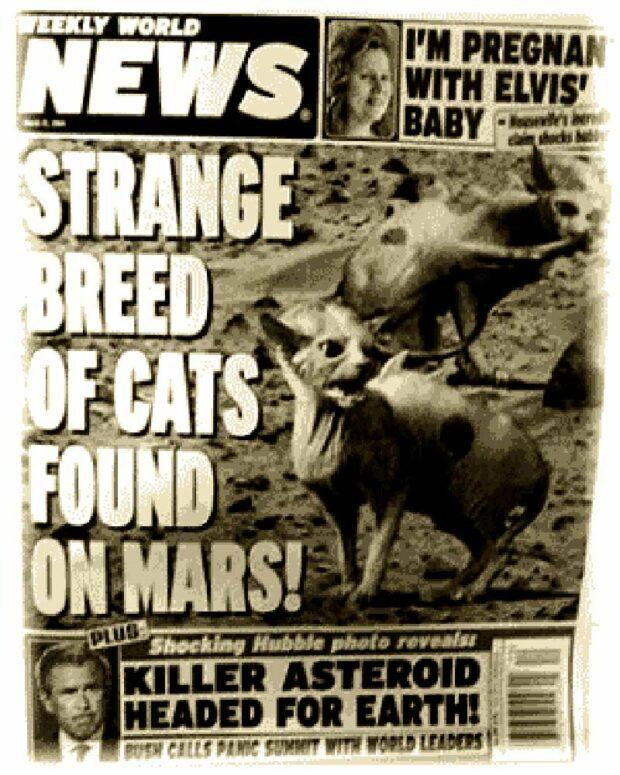 Strange Breed Of Cats Found On Mars!