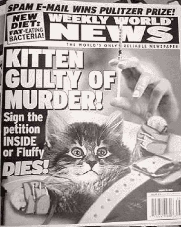 Tabloid Cat Headline: Kitten Guilty Of Murder!
