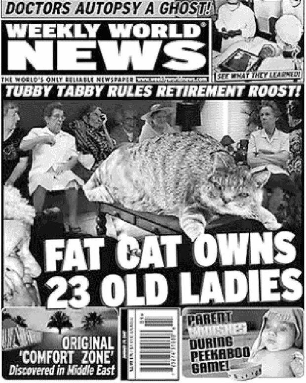 Tabloid Cat: Fat Cat Owns 23 Old Ladies