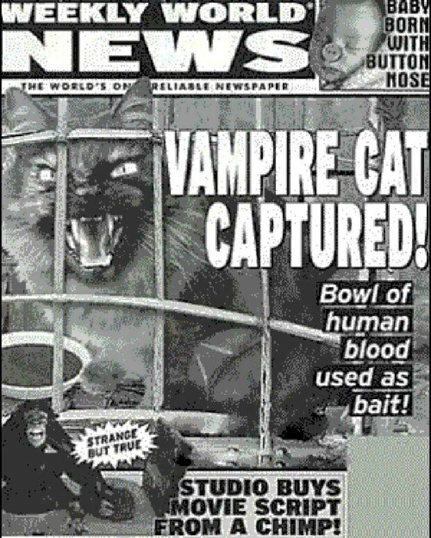Vampire Cat Captured!