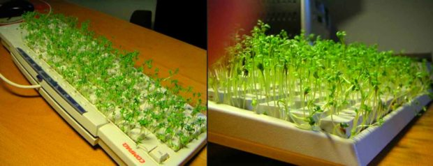 Funny Cubicle Pranks: Sprouts