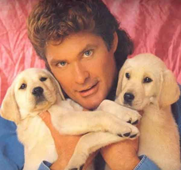 David Hasselhoff Holding Puppies