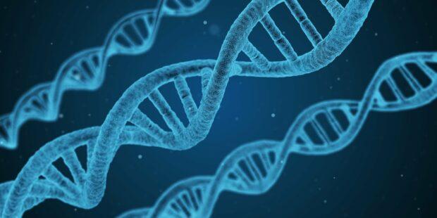 Is The Hdec2 Sleepless Elite Gene In Your Dna?