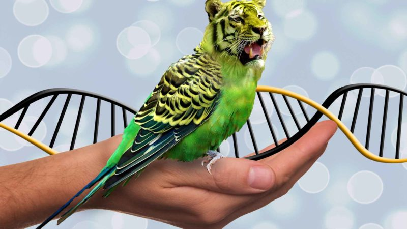 DNA Jokes: Tiger Parrot