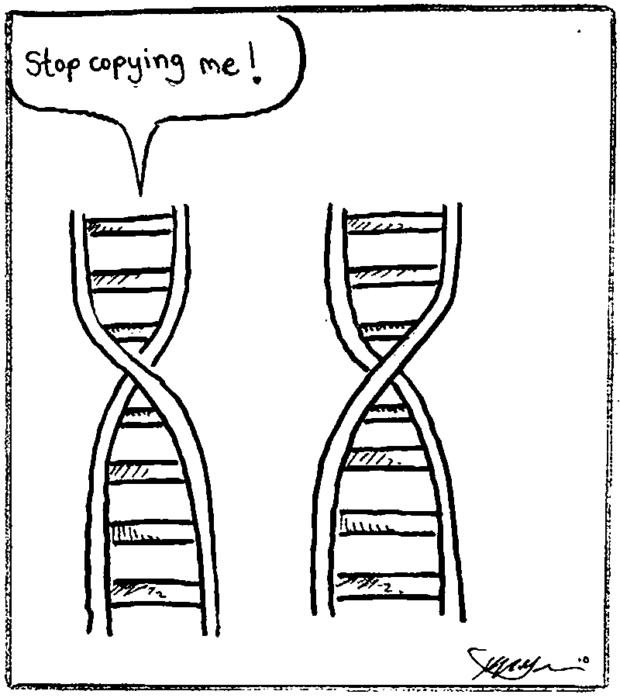 DNA Copy