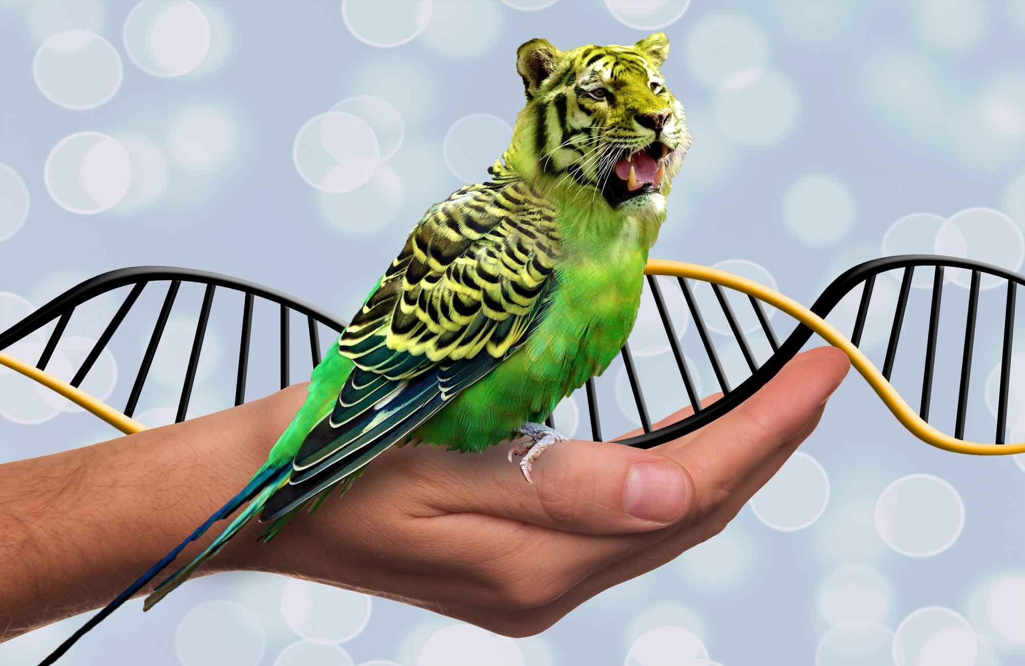DNA Jokes: Tiger Parrot