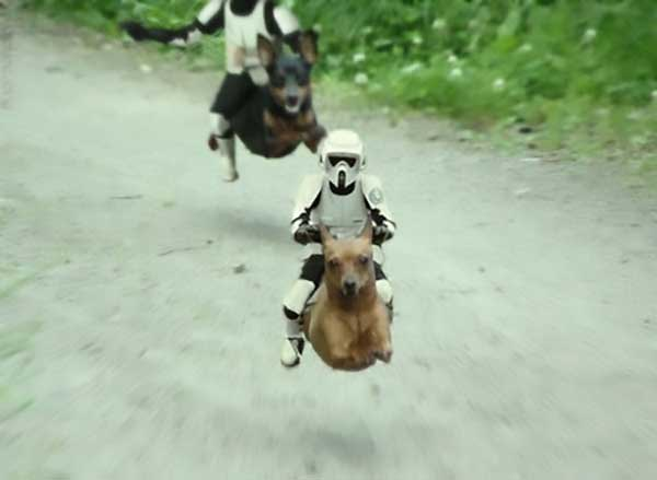 Small Dog Speeder Bikes - Funny Star Wars Pictures