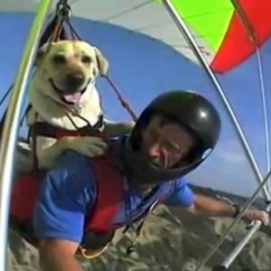 Dogs Are Awesome: Video Highlights Incredible Actions Of Dogs