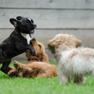 Dog Butt-Sniffing Explained: Why Do Dogs Like To Smell Butts?