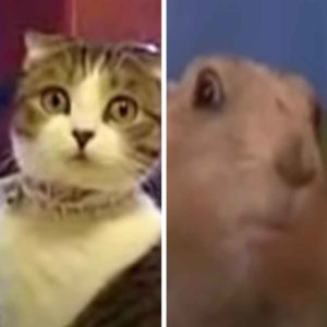 Dramatic Cat vs Dramatic Chipmunk: Why Are These Animal Memes So Popular?