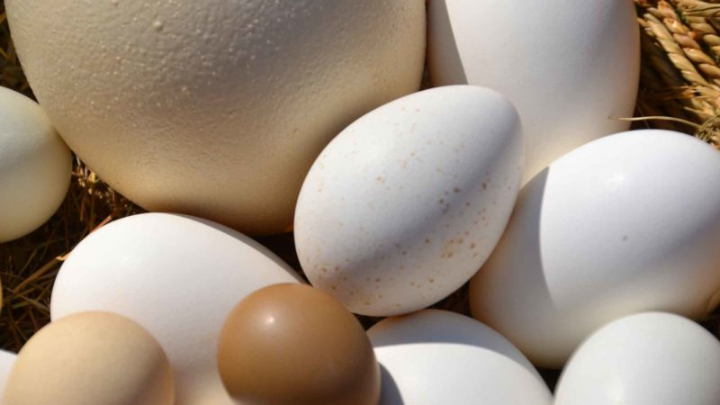 Egg Basket Ostrich Egg Goose Egg Putenei Hen's Egg Eggs