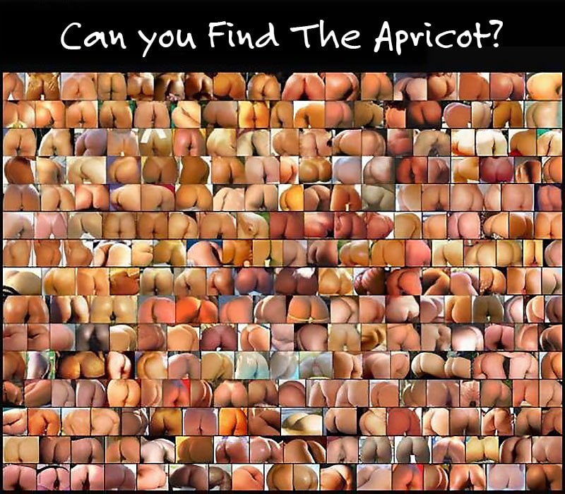 Find The Apricot
