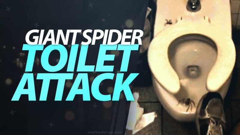 Giant Spider Toilet Attack