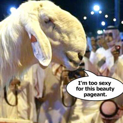 Beautiful Goat Contest