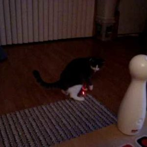 Why The FroliCat Laser Cat Toy Is My Cat's New Favorite Toy
