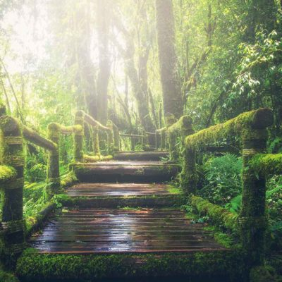 Wooden Walkway In The Jungle
