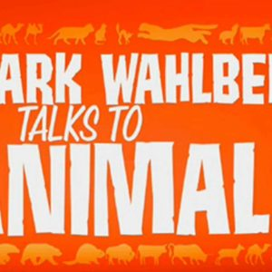 Mark Wahlberg Does NOT Like The 'Mark Wahlberg Talks to Animals' SNL Skit