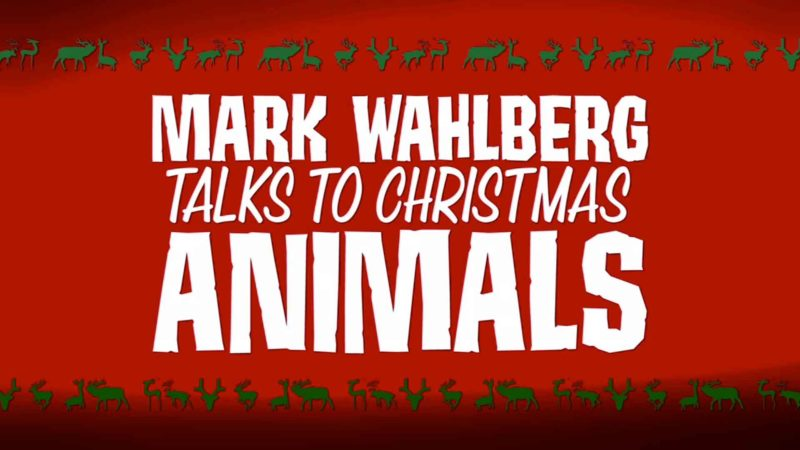 Mark Wahlberg Talks to Christmas Animals