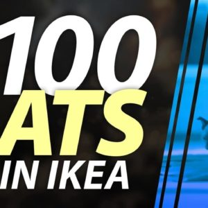 Ikea Cats: Watch What Happens When Filmmakers Let 100 Cats Loose in IKEA
