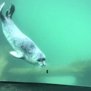 Seal Meets Butterfly: Adorable Encounter Captured On Video