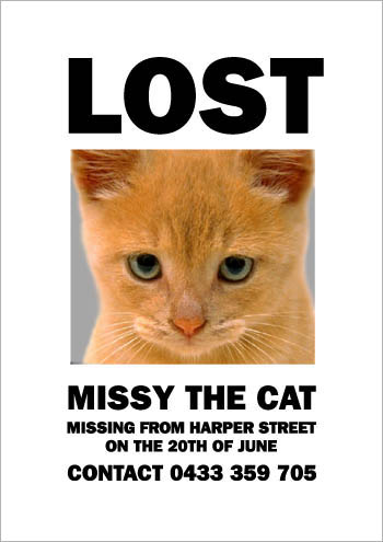 Missing Missy: Wrong Cat Photo