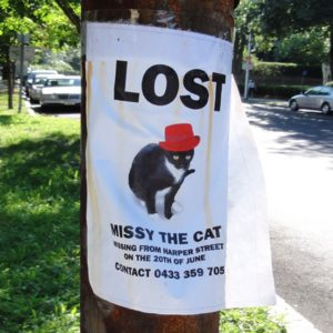 Missing Missy: The Lost Cat with a Photoshop Battle