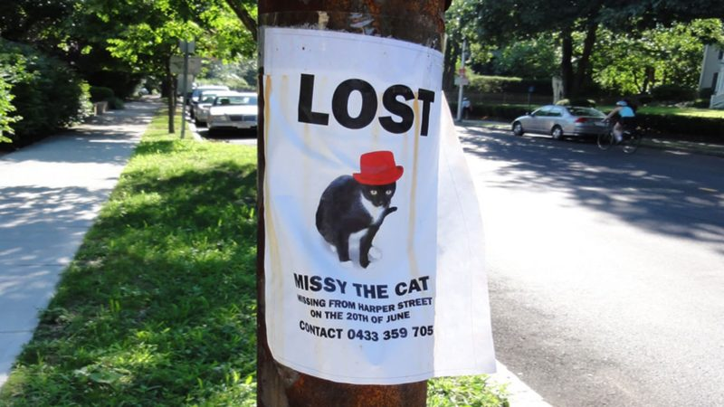 Missing Missy: The Lost Cat Poster Drama