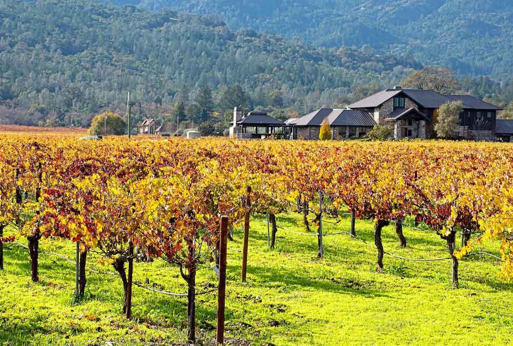 Napa Valley, CA - Autumn