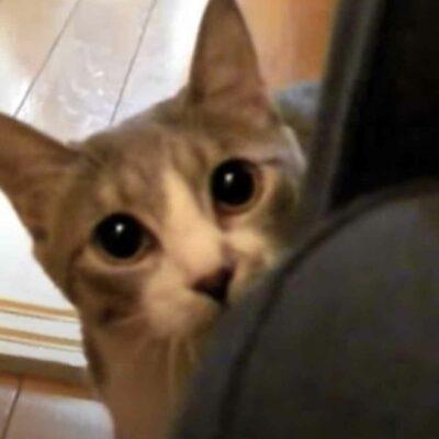 Ninja Cat Viral Video