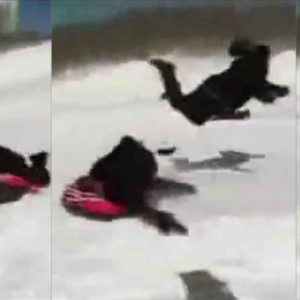 Canadian Reporter Owned By A Sled on Live TV