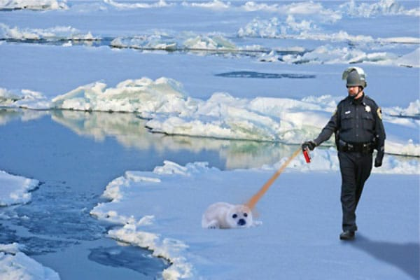 Pepper Spray Meme - Lt. John Pike pepper spraying a baby seal.