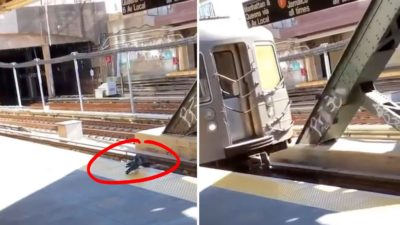 Two Nyc Pigeons Commit Premeditated Homicide By Pushing Another Pigeon Into An Oncoming Subway Train