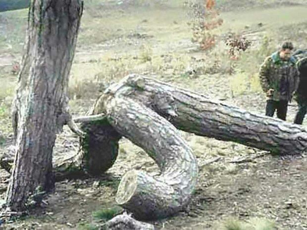 Doggy Style Tree