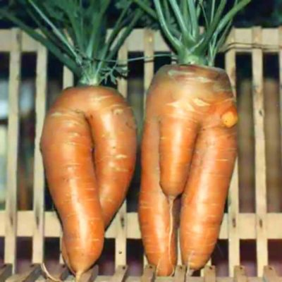 Naked Carrots