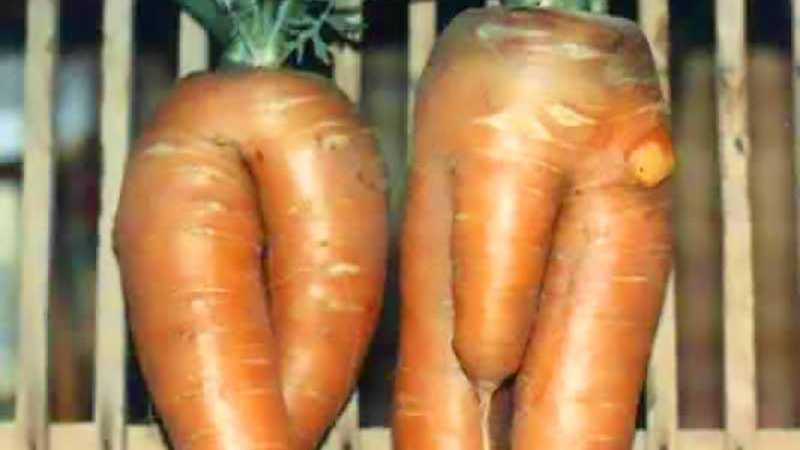 Naked Carrots