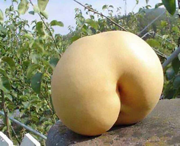 Plant Porn: Melon Butt